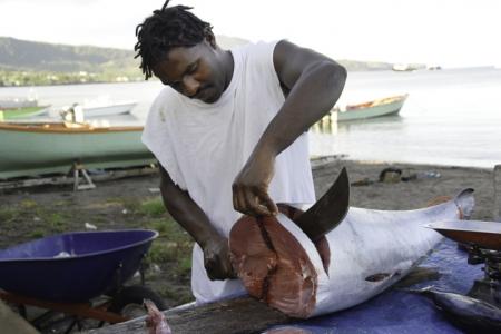 portsmouth-market-tuna